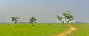 নজরপুর